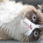 Grumpy Cat: de meme a negocio millonario